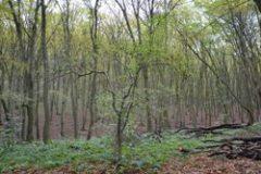 Az erdőben